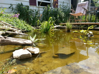 Robert brumm 39 s blog robert brumm for Building a goldfish pond